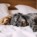 5 Clever Ways to Get a Better Night's Sleep